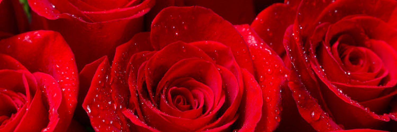 mazzo rose vigonovo